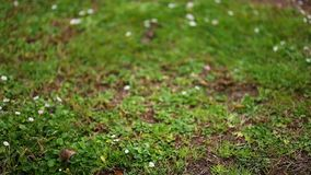 Textura de la hierba en el parque metrajes
