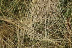 Textura de la hierba - fondo Fotos de archivo