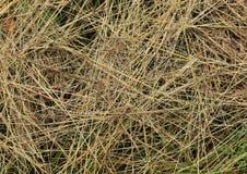 Textura de la hierba - fondo Imagenes de archivo