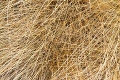 Textura de la hierba seca Imagen de archivo