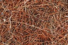 Textura de la hierba seca Fotografía de archivo libre de regalías
