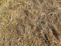 Textura de la hierba seca Imagenes de archivo