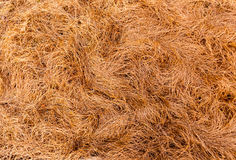 Textura de la hierba seca foto de archivo