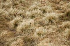 Textura de la hierba secada Foto de archivo libre de regalías