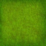 Textura de la hierba verde stock de ilustración
