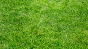 Textura de la hierba verde Fotografía de archivo