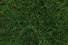 Textura de la hierba verde Fotografía de archivo libre de regalías