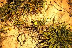 Textura de la hierba verde Hierba fresca de la primavera Arte natural del papel pintado del primer fotos de archivo