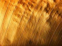 Textura de la hoja Foto de archivo libre de regalías