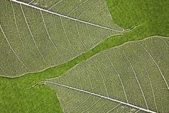 Textura de la hoja Fotografía de archivo libre de regalías