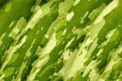 Textura de la hoja Imagen de archivo