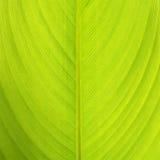 Textura de la hoja Imagen de archivo libre de regalías