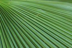 Textura de la hoja de palma Foto de archivo libre de regalías