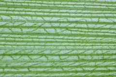 Textura de la hoja del maíz Imágenes de archivo libres de regalías