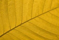 Textura de la hoja del otoño Fotos de archivo libres de regalías