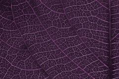 Textura de la hoja o fondo de la hoja para el diseño Fotografía de archivo libre de regalías