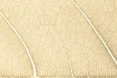 Textura de la hoja o fondo de la hoja para el diseño Adornos de la hoja que ocurre natural Imagen de archivo libre de regalías