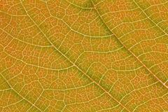 Textura de la hoja o fondo de la hoja para el diseño Adornos de la hoja que ocurre natural Fotografía de archivo libre de regalías