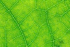 Textura de la hoja o fondo de la hoja para la plantilla del sitio web, la belleza de primavera, el ambiente y el diseño de concep fotos de archivo