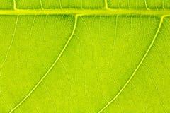 Textura de la hoja o fondo de la hoja para la plantilla del sitio web, la postal, la decoración y el diseño de concepto de la agr Imagenes de archivo