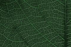 Textura de la hoja o fondo de la hoja para la plantilla del sitio web, la postal, la decoración y el diseño de concepto de la agr Foto de archivo