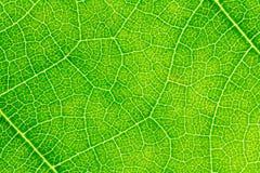 Textura de la hoja o fondo de la hoja para la plantilla del sitio web, la postal, la decoración y el diseño de concepto de la agr Imágenes de archivo libres de regalías