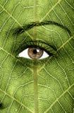 Textura de la hoja pintada en cara Imagen de archivo