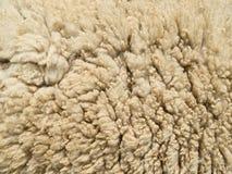 Textura de la lana de cordero fotografía de archivo libre de regalías