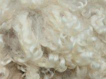Textura de la lana merina rizada Fotografía de archivo libre de regalías