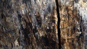 Textura de la madera Foto de archivo libre de regalías