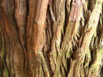 Textura de la madera Fotos de archivo