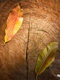 Textura de la madera agrietada vieja del tocón Imagen de archivo libre de regalías