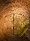 Textura de la madera agrietada vieja del tocón Imágenes de archivo libres de regalías
