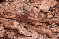 Textura de la madera de la corteza Fotos de archivo libres de regalías