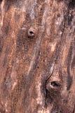 Textura de la madera de la corteza Imagenes de archivo