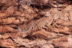 Textura de la madera de la corteza Imagen de archivo