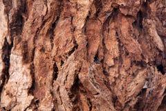 Textura de la madera de la corteza Fotografía de archivo