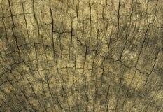 Textura de la madera de la corteza Imágenes de archivo libres de regalías