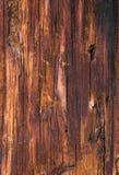 Textura de la madera impregnada vieja del árbol de pino Fotografía de archivo libre de regalías