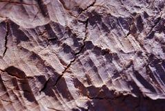 Textura de la madera rosada mordida por los castores, textura orgánica foto de archivo