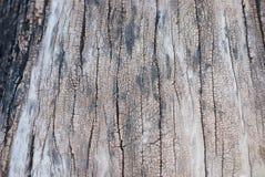 Textura de la madera vieja de la teca Foto de archivo
