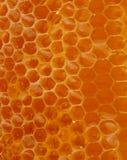 Textura de la miel Imagenes de archivo