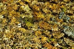 Textura de la ondulación del agua Imagenes de archivo
