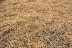 Textura de la paja seca en tierras de labrantío como fondo Imágenes de archivo libres de regalías