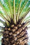 Textura de la palma Foto de archivo