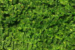 Textura de la pared Fotografía de archivo libre de regalías