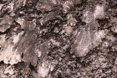 Textura de la pared del cemento Imagenes de archivo