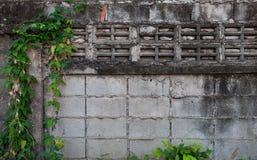 Textura de la pared del Grunge con la hoja verde para el fondo imagen de archivo libre de regalías