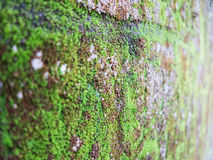 Textura de la pared del limo Foto de archivo libre de regalías
