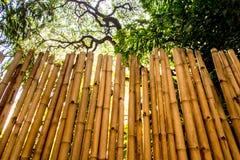 Textura de la pared natural de la tala que adorna de bambú Imagen de archivo